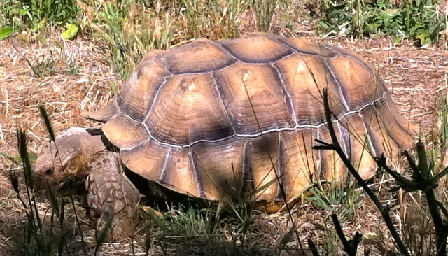 There was even a tortoise