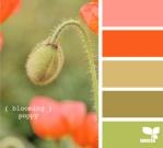 BloomingPoppy