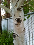 Another tree trunk