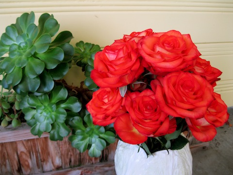 My beautiful birthday roses!